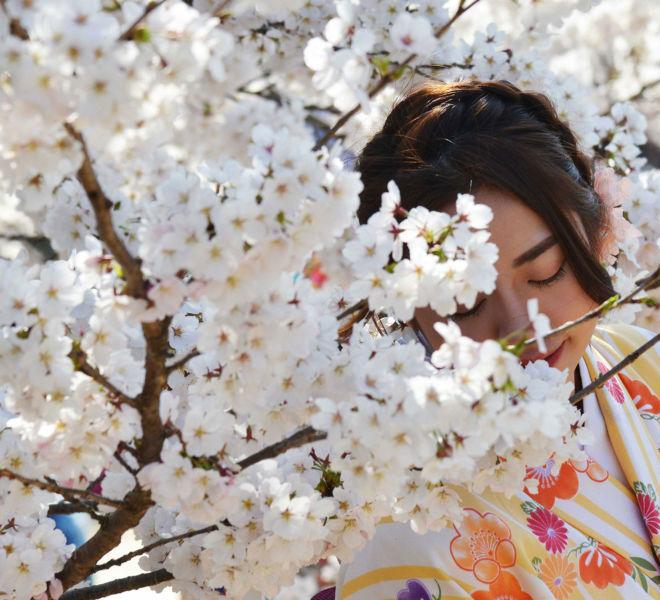Photo de Sakura par Kreastyl Communication